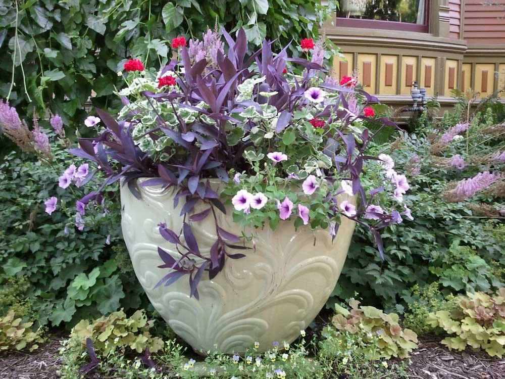Annual Containers Graziano Gardens