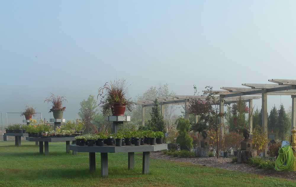 Graziano Gardens Perennials 1