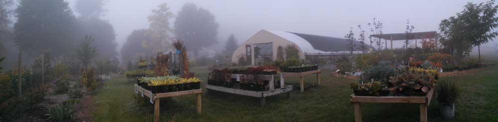 Graziano Gardens Perennials